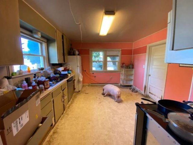Rented Apartments Surprises