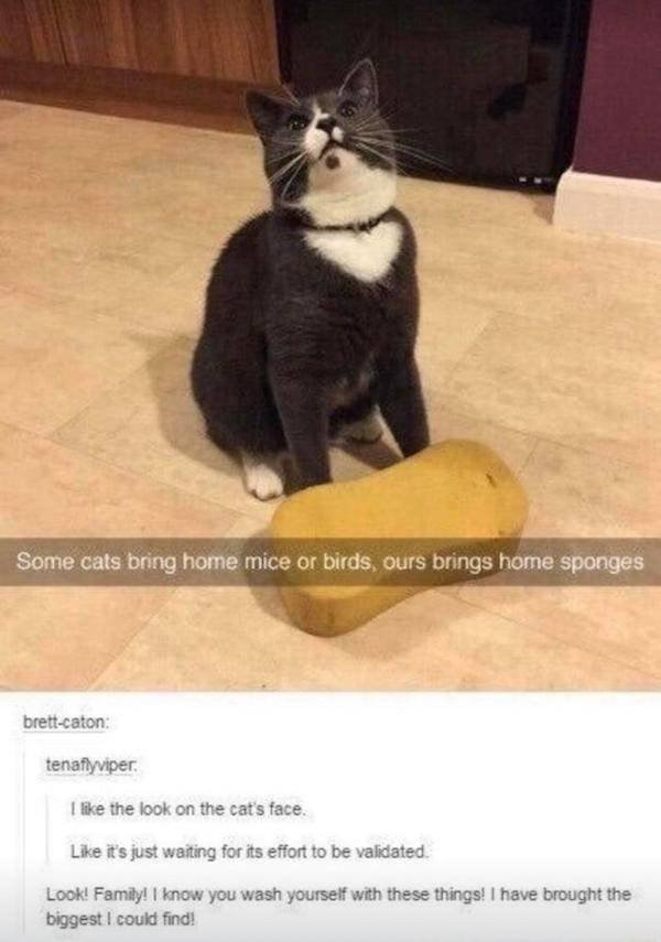 Wholesome Stories, part 41