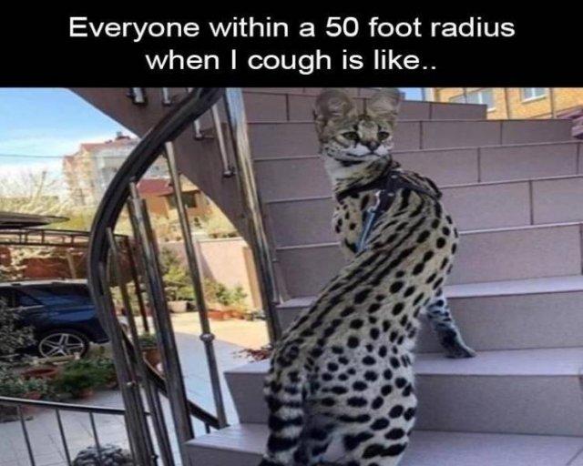 Random Funny Memes, part 162