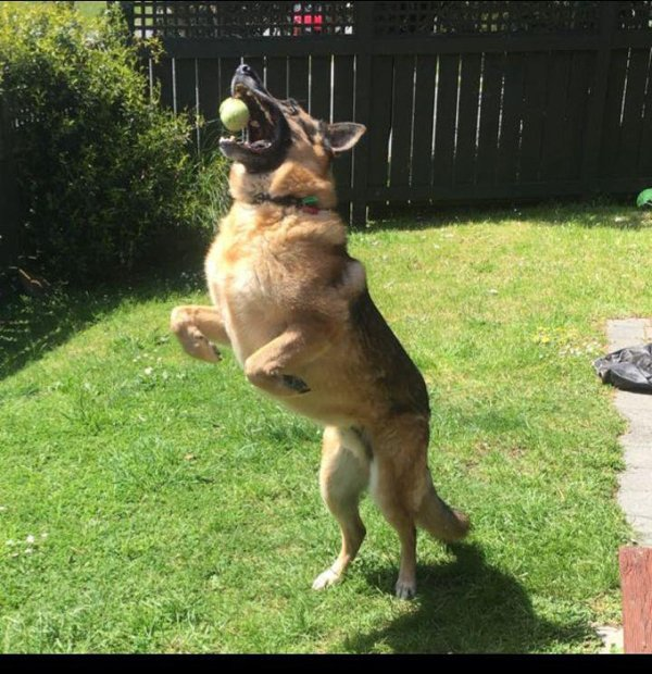 These Dogs Are Broken