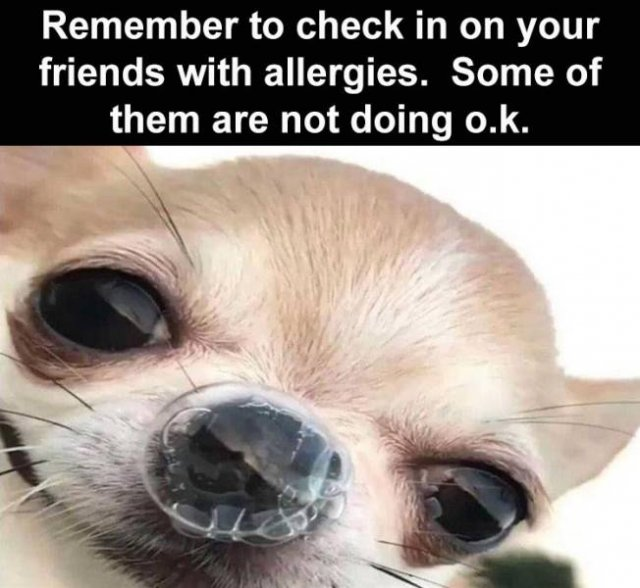 Random Funny Memes, part 191