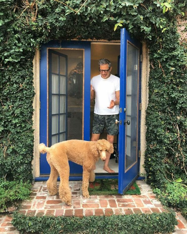 Celebrities With Their Dogs