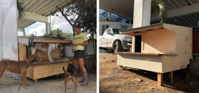 These People Will Do Everything For Their Pets