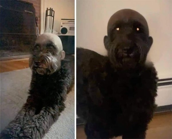 Funny And Creepy Animals