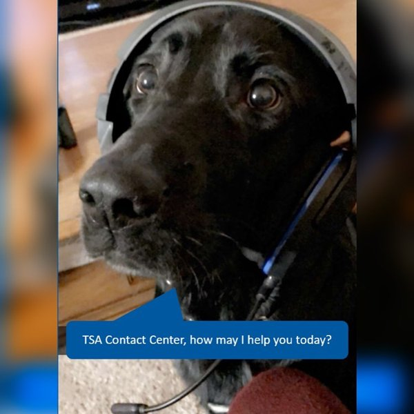 TSA Dog Finds