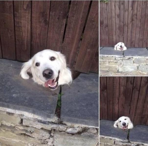 Funny Pets, part 3