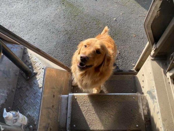 UPS Dogs