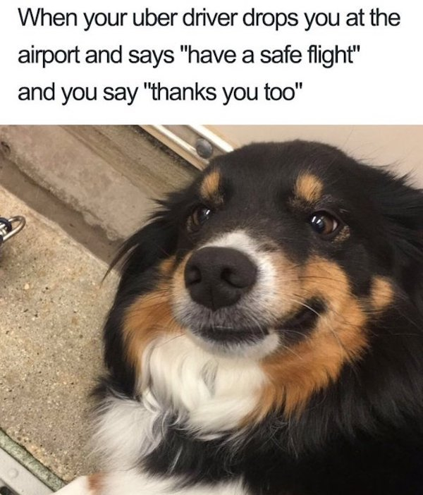 Dog Memes And Pictures
