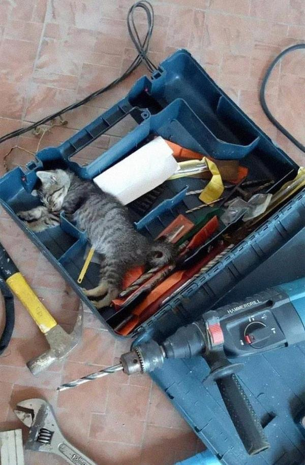 Cats With Jobs