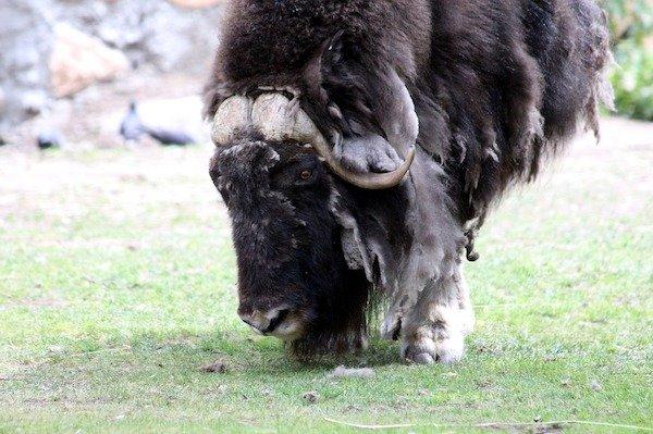 World's Strongest Animals