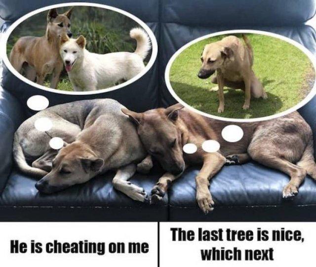 Dog Memes, part 7