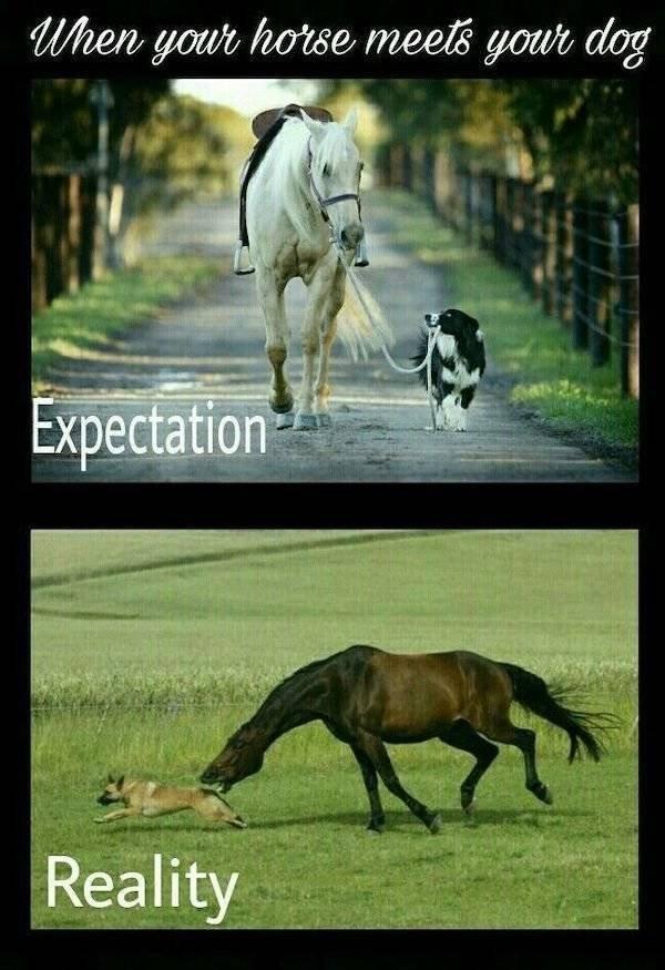Expectations Vs. Reality, part 35