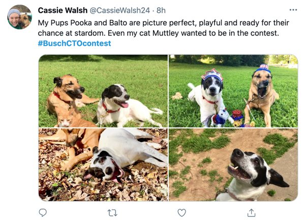 People Create 'Resumes' For Their Dogs