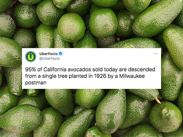 Interesting Facts, part 105