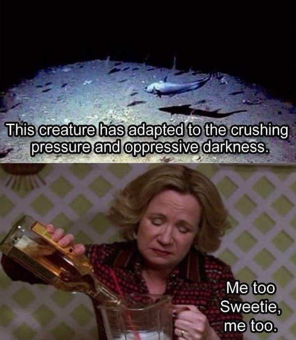 Alcohol Memes And Pictures, part 22