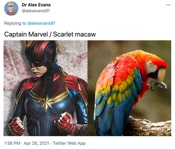 MCU Heroes And Their Bird Counterparts