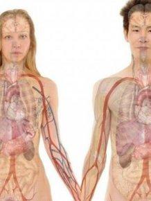 Human Body Wonders