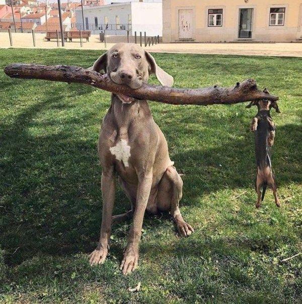 These Animals Are Broken