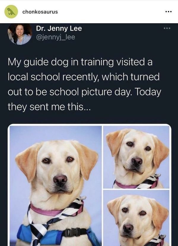 Wholesome Dog Stories