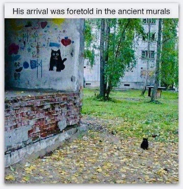 Cat Memes, part 3
