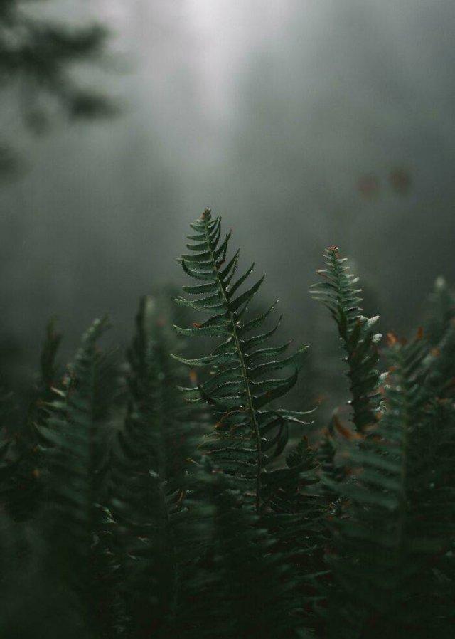 Beautiful Plants