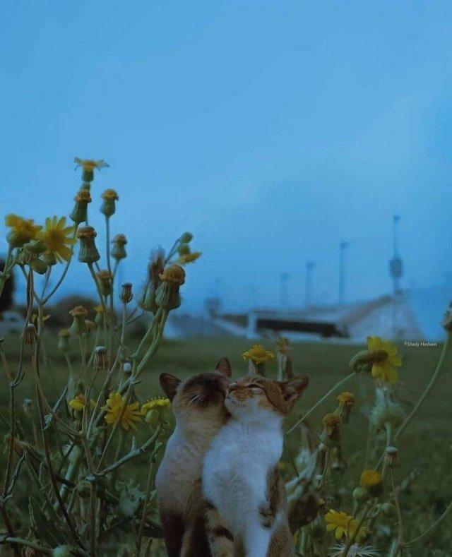 Cute Animals, part 13