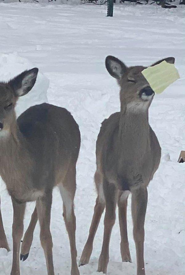 Funny Wildlife Photos