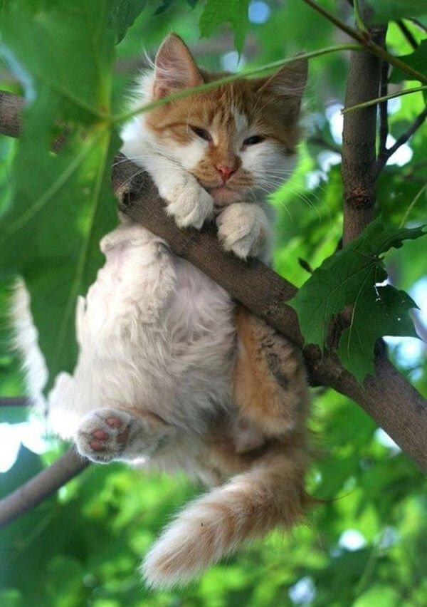 Hilarious Cats, part 5