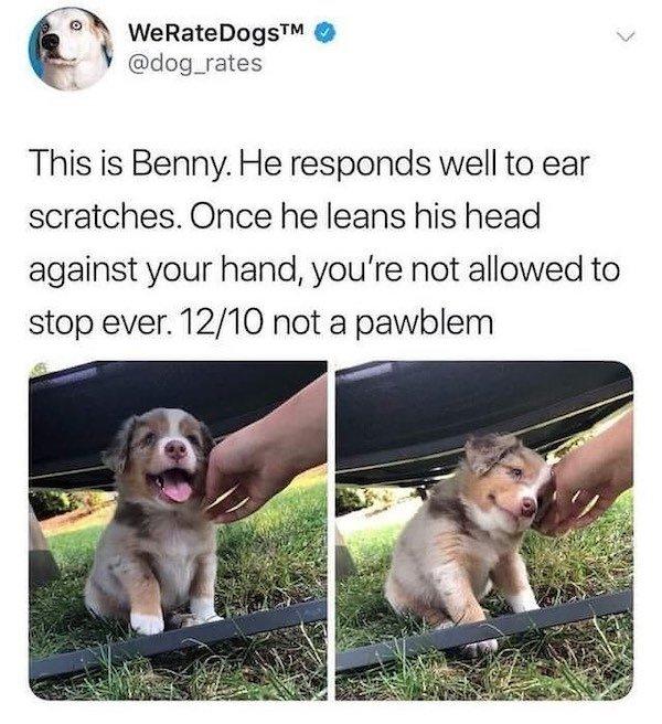 Dog Memes, part 8