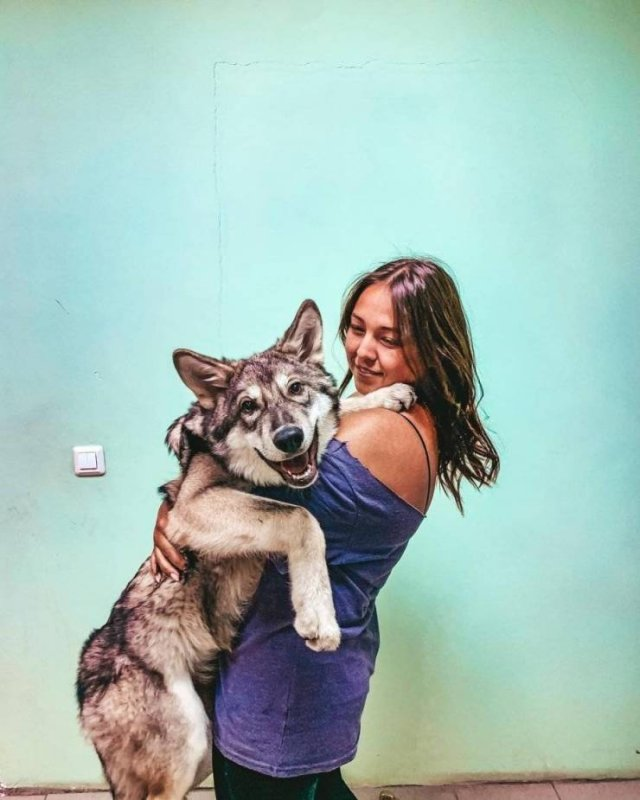 Woman And Wolf Become Inseparable Friends