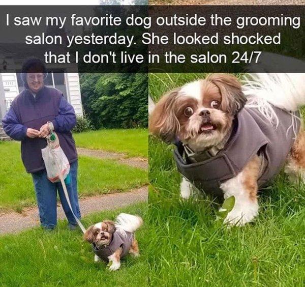 Dog Memes, part 9