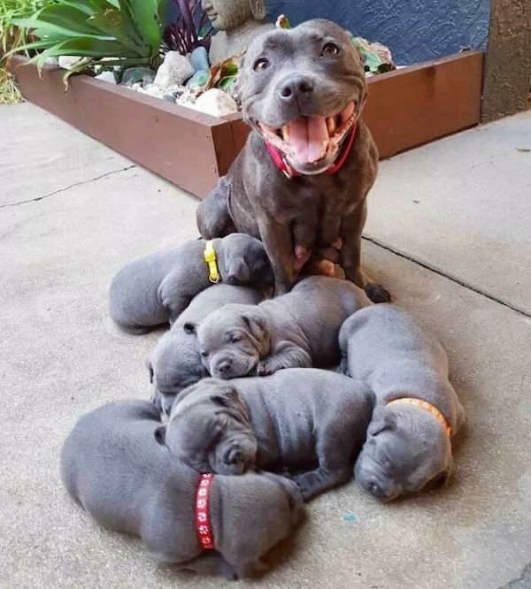 Cute Puppies, part 4