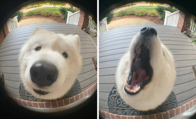 Funny Dogs, part 8
