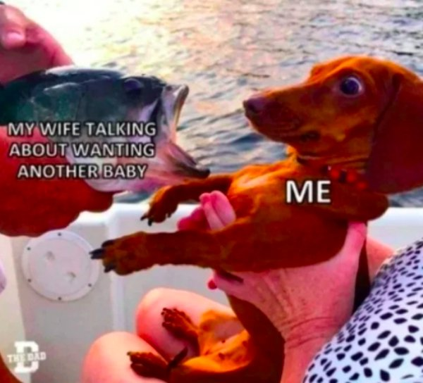 Married Men Memes, part 2