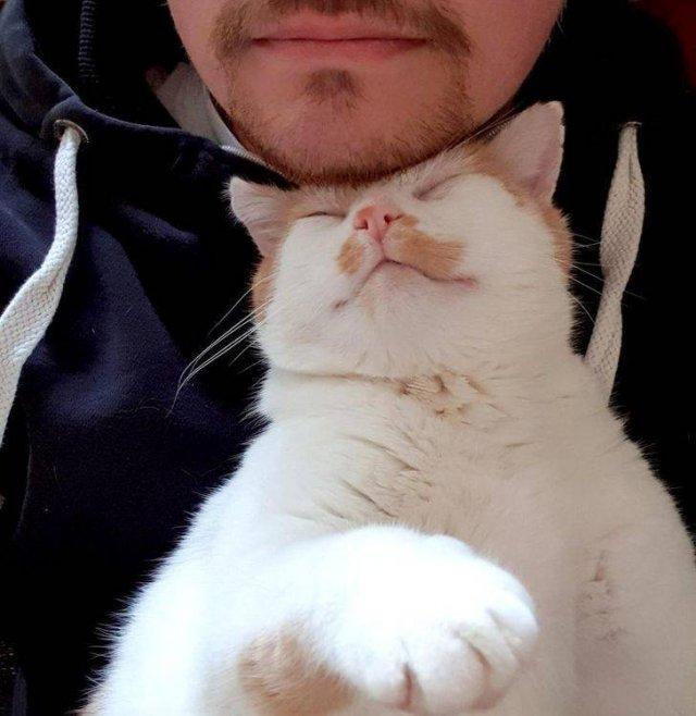 Cute Pets, part 2