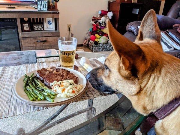 Pets Staring At Food, part 2