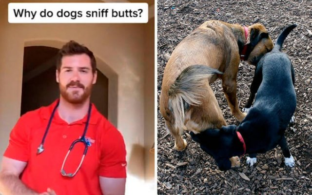 Veterinarian Shares Pet Care Tips
