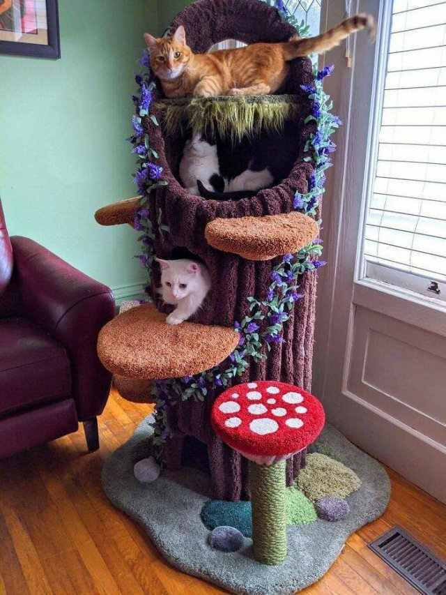 Spoiled Cats