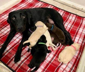 Animal Motherhood