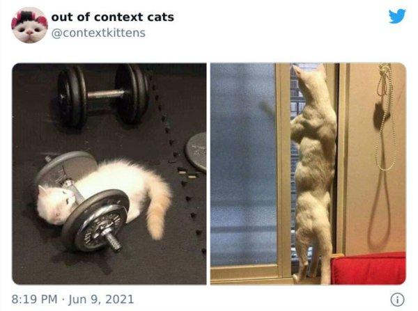 Hilarious Cats, part 6