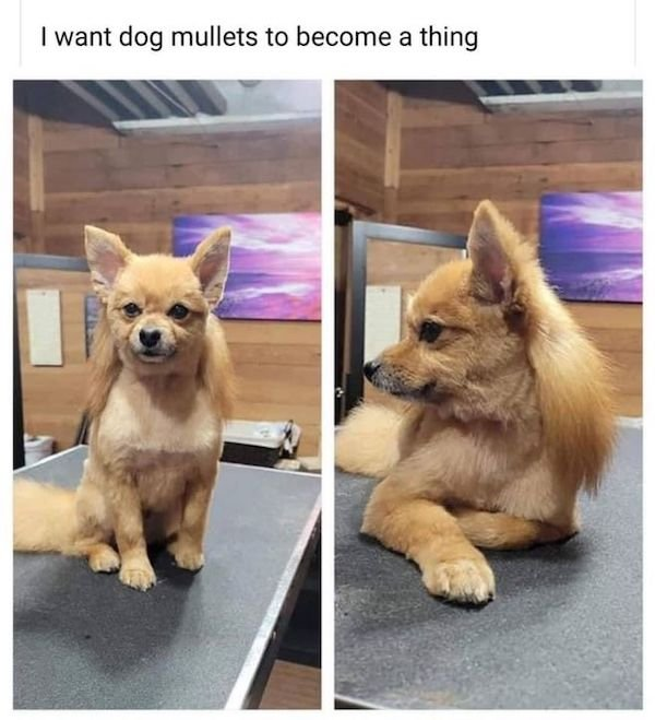 Funny Animal Memes And Pictures