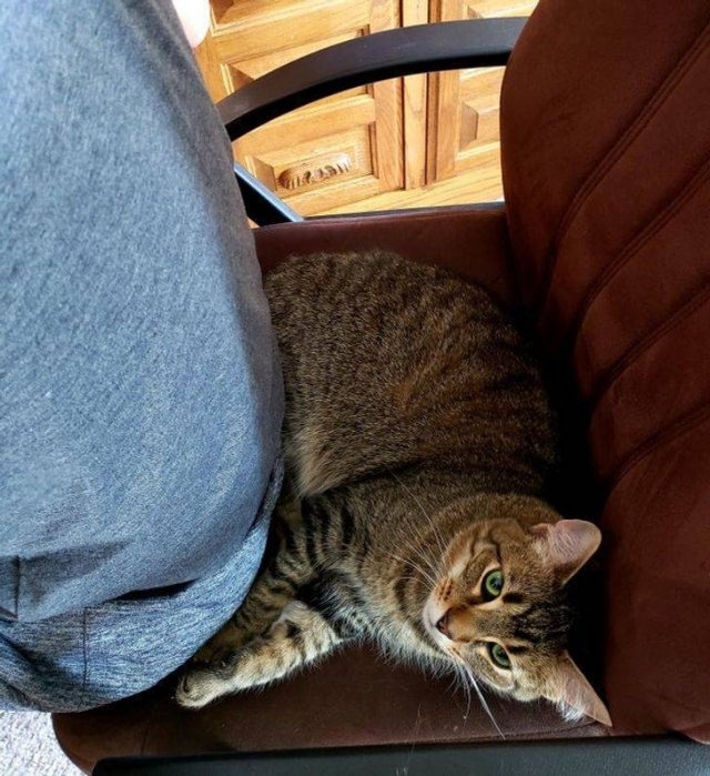 Pets Find Best Places For Their Rest