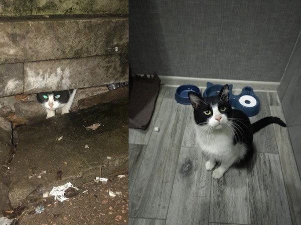 Animals Before And After Adoption