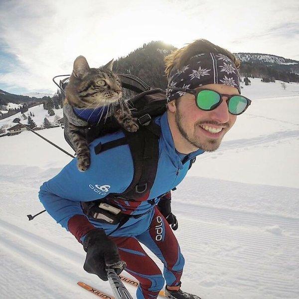 Traveling Cat