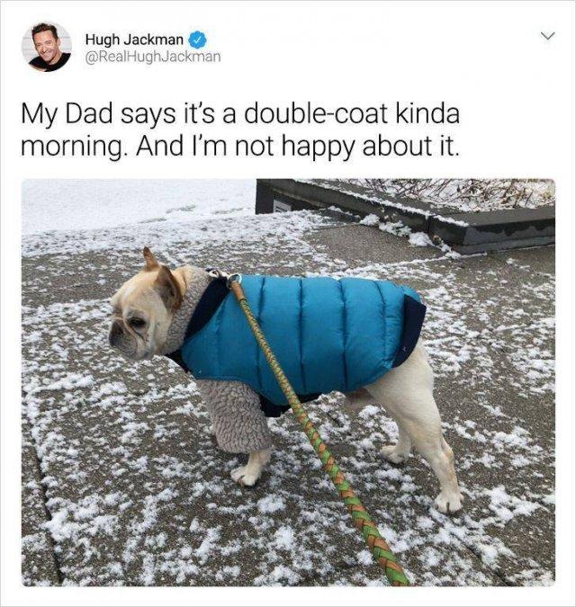 Celebrity Humor