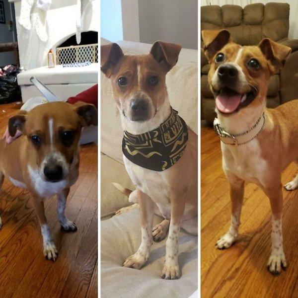 Animal Rescue Stories, part 2