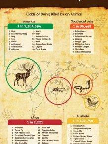 World's Most Deadliest Animals