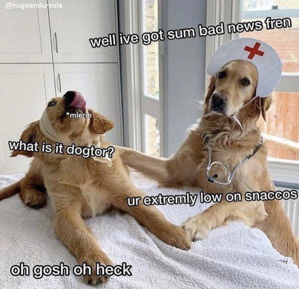 Funny Animals, part 64
