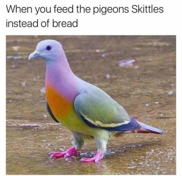 Bird Memes