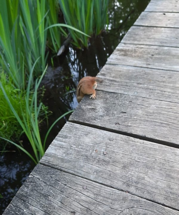 Weird Wildlife Photography